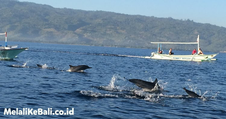 Lihat Dolphin Lovina